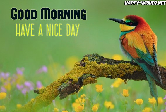 Good Morning Wishes with Colourfull Bird Pictures
