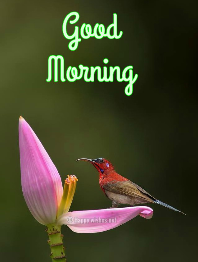 Good Morning Wishes with Cute Bird Images