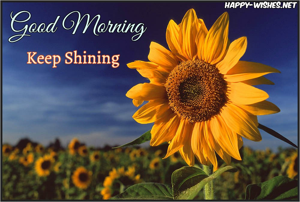20 Good Morning Wishes With Sunflower