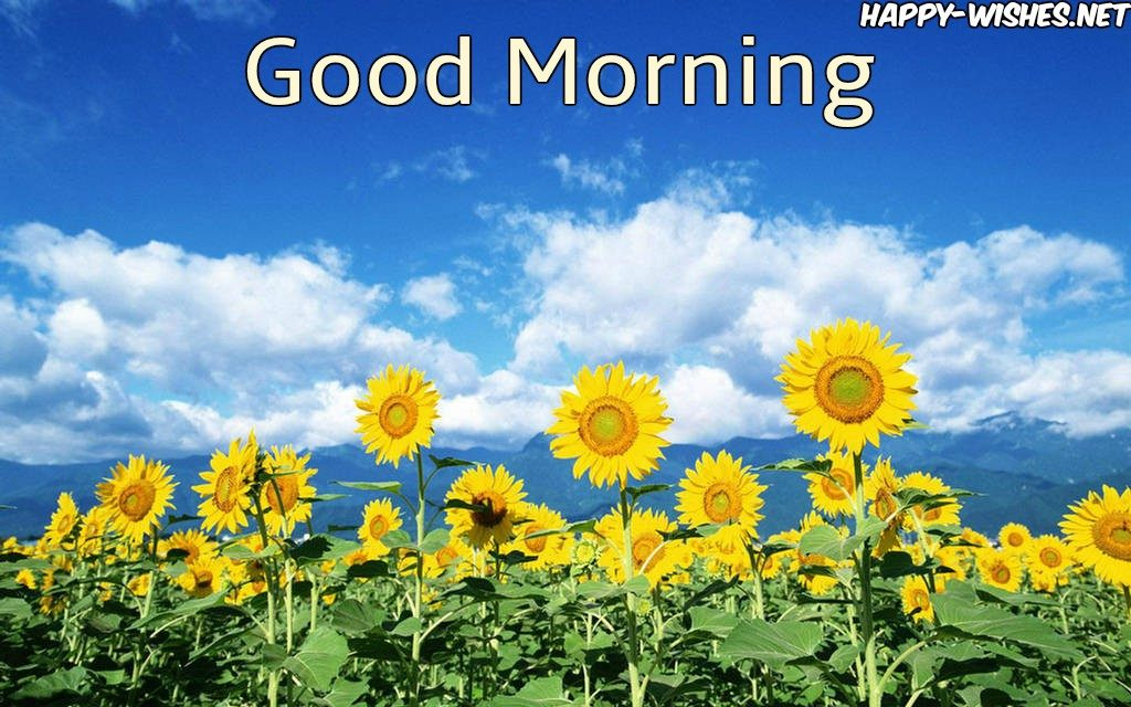 Good Morning Wishes with Sunflower with blue sky Background