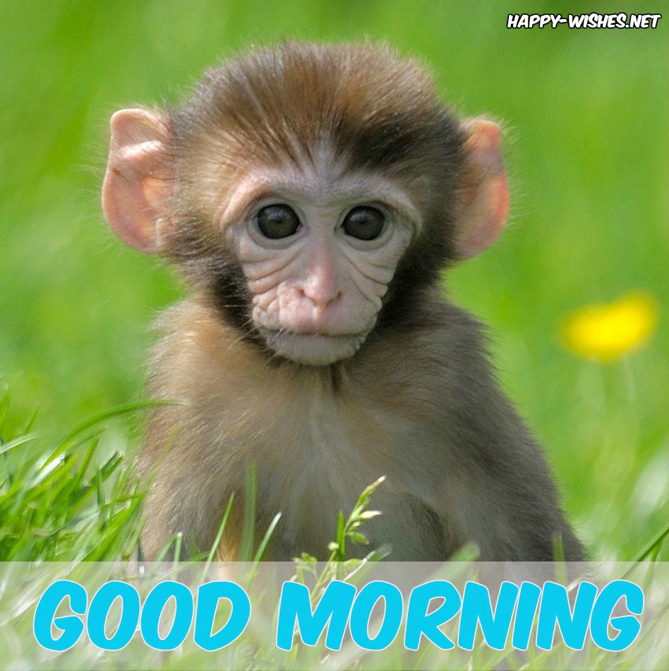Good Morning Wishes with small Monkey Images