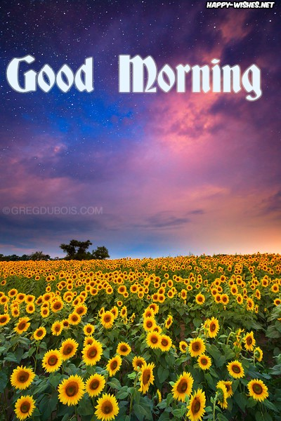 Good Morning Wishes with sun flower photo and beautiful sky