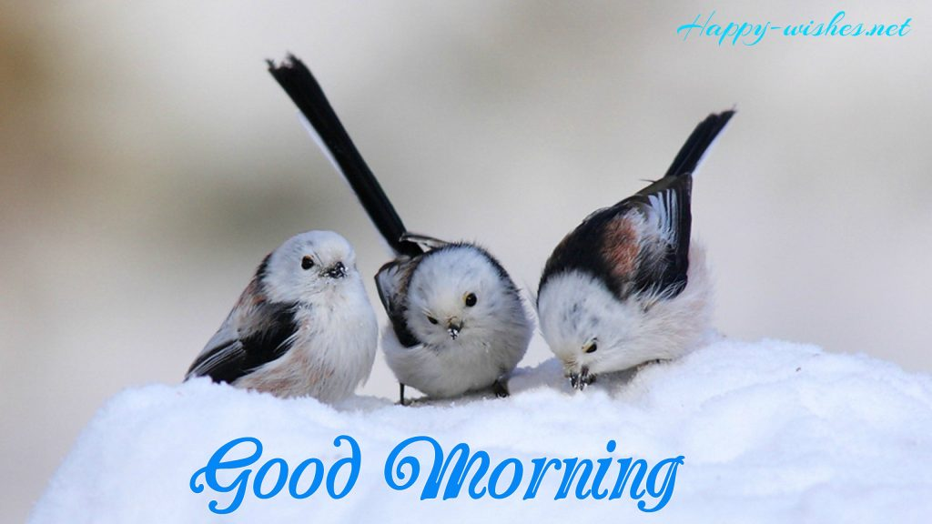 Good Morning images with Bird and the snow