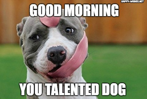 Good Morning meme with talented dog images