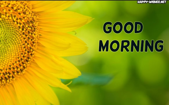 Good Morning wishes with Half Sunflower images