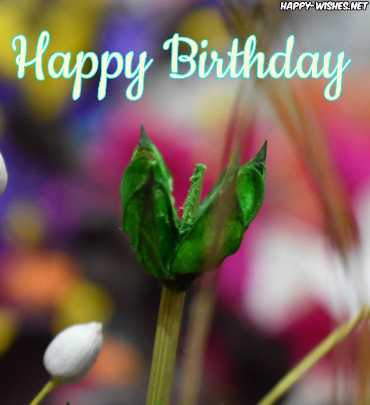 Happy Birthday wishes with flower photos