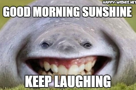 Laughing Whale Good Morning Memes