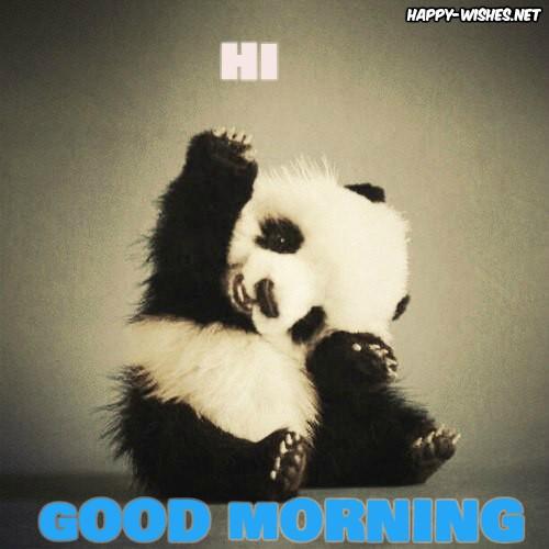Panda Saying Hi Good Morning Images