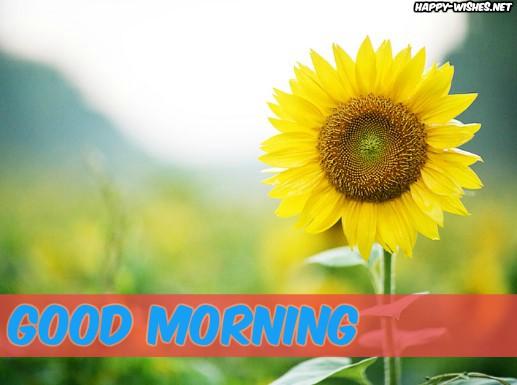 Singel Sunflower Good MORNING IMAGES