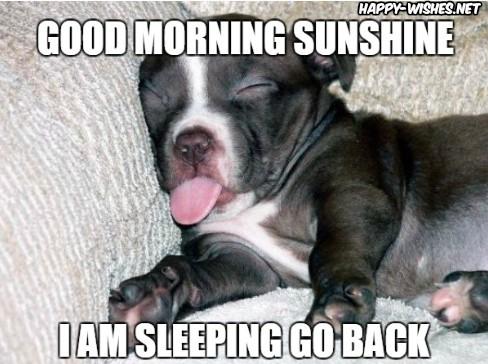 Sleeping Doggy Good Morning Images