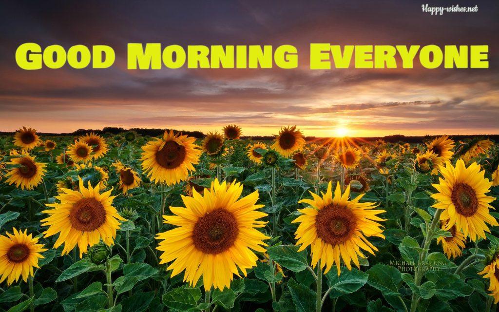 Sunflower Sunshine Good Morning Images