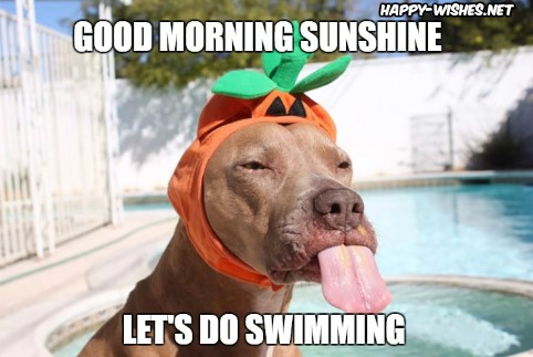 Swimming Good Morning Memes