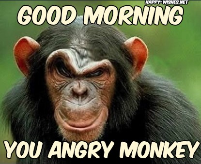 angry Monkey Good Morning Images