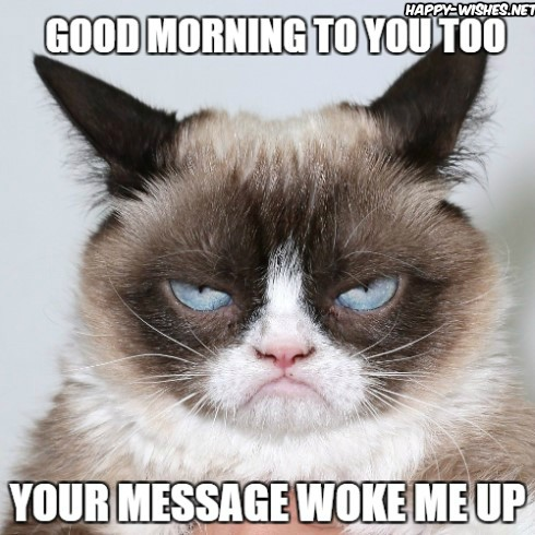angry cat in Good Morning meme for him