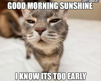 confused cat in Good Morning sunshine meme