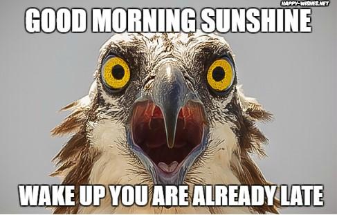 funny Good Morning Sunshine meme