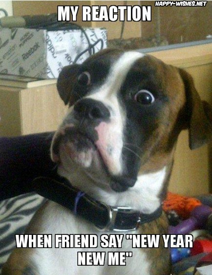 Funny New Year Resolution Memes using skeptical dog images