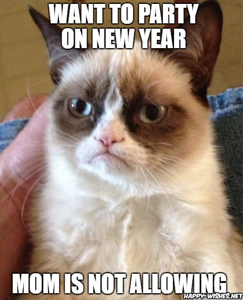 Happy new year cat memes