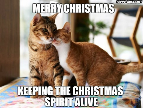 funny merry Christmas meme with cat images