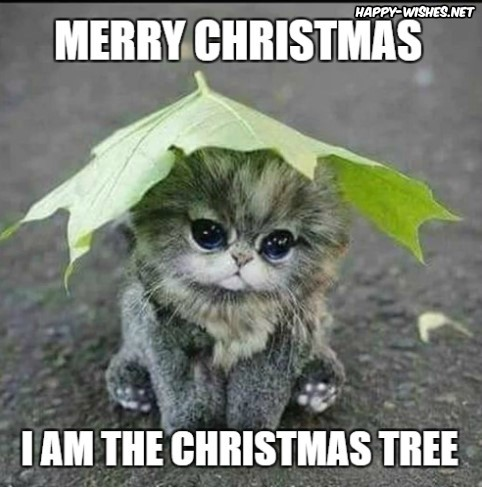 i am the christmas tree cat memes