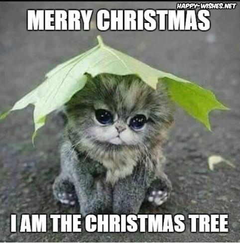50+ Best Funny Christmas Memes