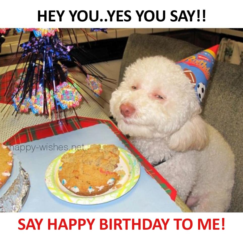 Say Happy Birthday to me memes